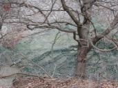 Využití stromů určených k likvidaci pro vyvěšení provizorní bariéry.